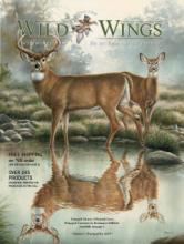 Wild Wings _国外灯具设计