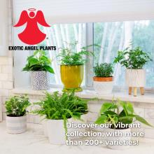 Costa Farms 2020年欧美花园陶瓷花盆设计画-2744407_工艺品设计杂志