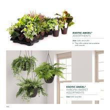Costa Farms 2020年欧美花园陶瓷花盆设计画-2744411_工艺品设计杂志