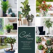 Costa Farms 2020年欧美花园陶瓷花盆设计画-2744461_工艺品设计杂志
