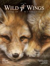 Wild Wings 2020美国室内家居画框目录-2597869_工艺品设计杂志