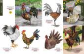 Regal 2020-2021国外花园铁艺设计网-2698218_工艺品设计杂志
