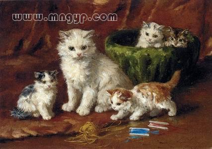 壁纸 动物 猫 猫咪 小猫 桌面 427_300